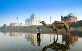 Picture India, Taj Mahal, camel