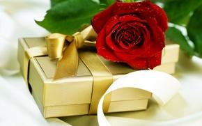 Wallpaper rose, gift, water, red, drops, Box