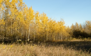 Picture autumn, trees, nature, Nature, trees, autumn, fall