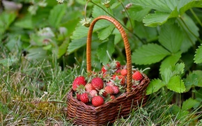 Picture berries, basket, strawberries