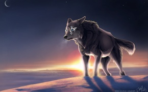 Picture winter, wolf, magic