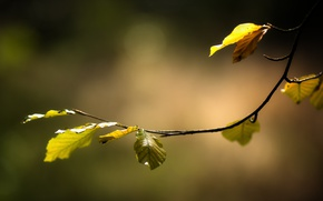 Picture autumn, leaves, nature, branch