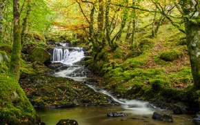 Picture autumn, forest, trees, stream, waterfall, moss, Scotland, river, cascade, Scotland, Beechwood