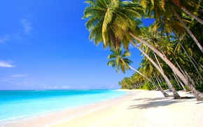 Picture sand, the sky, palm trees, shore, coast