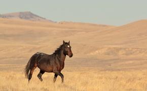 Picture hills, horse, wildlife