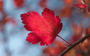 Picture autumn, sprig, Sheet, leaf, bokeh