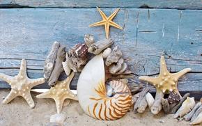 Picture starfish, stones, marine, seashells, beach, shell, sand, tree, sand, wood, starfish
