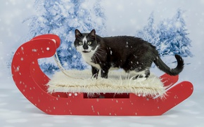 Picture cat, black, new year, ate, fur, Christmas, snow, winter, background, snowfall, sleigh, red, look, cat