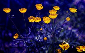 Picture Photoshop, blue background, buttercups