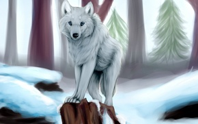 Picture winter, white, snow, trees, wolf, stump, tree