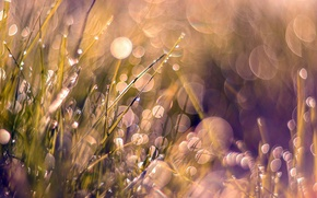 Picture grass, weeds, pink, dewdrop
