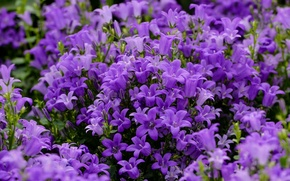 Picture bells, a lot, lilac
