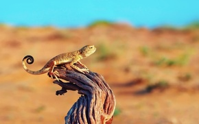 Picture the sky, tree, desert, branch, lizard, snag