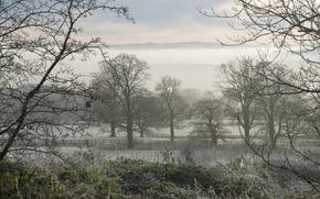 Picture frost, field, landscape