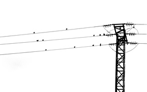Picture birds, song, power line