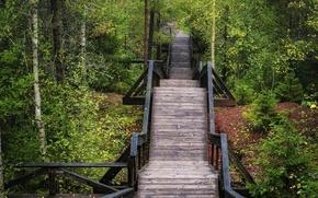 Picture autumn, forest, bridge, forest, bridge, Autumn, fall