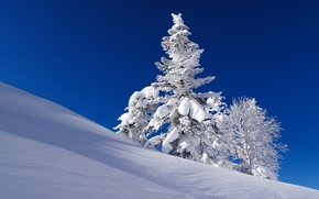 Picture winter, the sky, snow, tree, spruce, slope