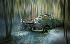 Picture forest, skeleton, machne