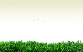 Picture white, grass, minimalism