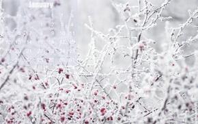 Picture winter, frost, Wallpaper, briar, calendar, January