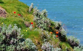 Picture sea, grass, flowers, shore, tulips