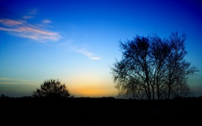 Wallpaper Bush, the end of the day, Cirrus clouds, tree