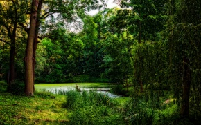 Picture greens, forest, grass, trees, pond, treatment, Tina, snag