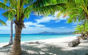 Picture sand, sea, Palma, shore, logs
