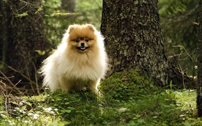 Picture forest, summer, dog