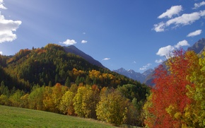 Picture autumn, grass, trees, mountains, slope