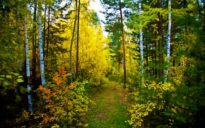 Wallpaper autumn, forest, nature, trail