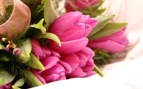 Wallpaper flowers, tulips