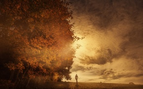 Picture autumn, the sky, clouds, trees, treatment, Autumn Sun