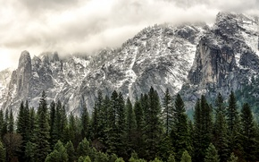 Picture winter, forest, mountains, USA, USA, Yosemite national Park, Yosemite National Park, State California, California