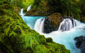 Picture forest, river, stones, waterfall, moss, fern, cascade, Washington, Washington, Columbia River Gorge, the Columbia river ...