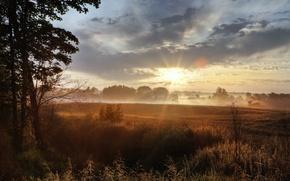 Wallpaper field, grass, the sun, light, morning