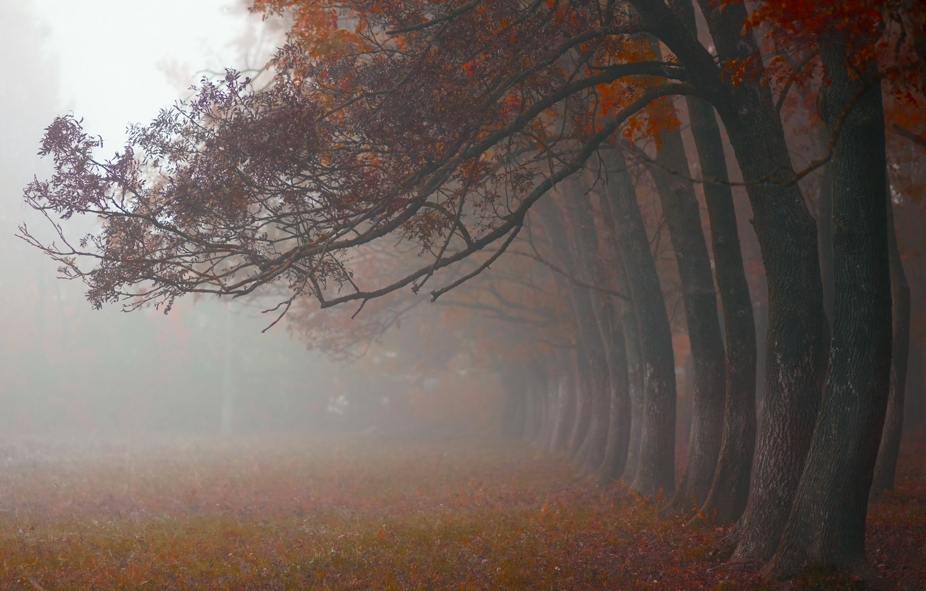 Photo wallpaper autumn, trees, nature, fog, morning, October