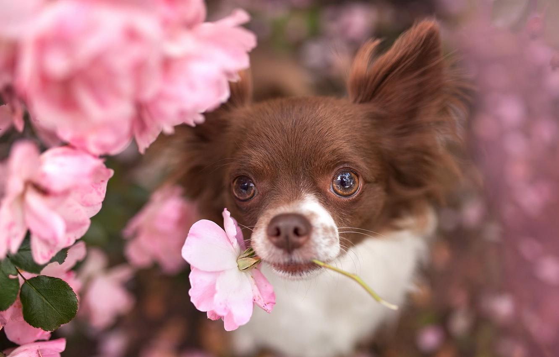 Photo wallpaper flower, look, each, dog