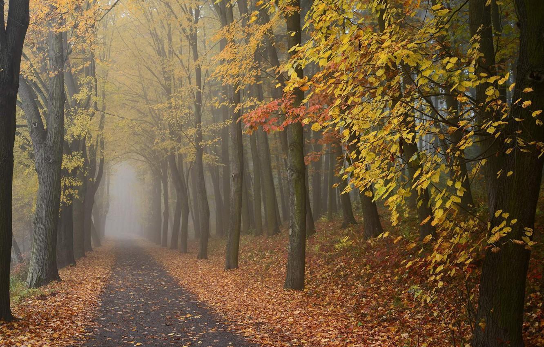 Photo wallpaper road, autumn, forest, fog