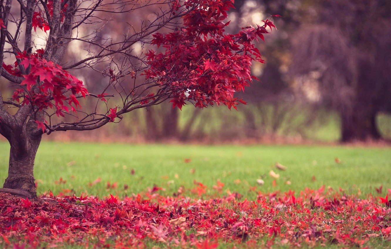 Photo wallpaper autumn, grass, leaves, nature, tree, red