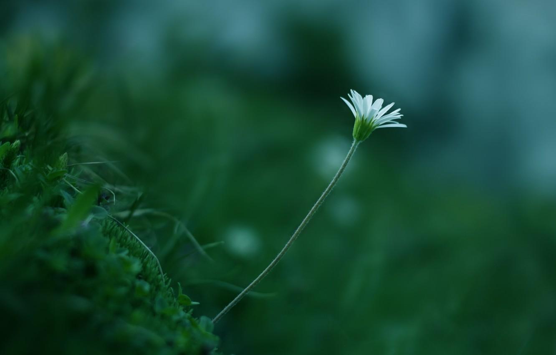 Photo wallpaper greens, white, flower, grass, macro, plant, color, stem