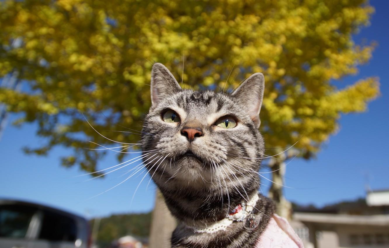 Photo wallpaper eyes, cat, mustache, Koshak