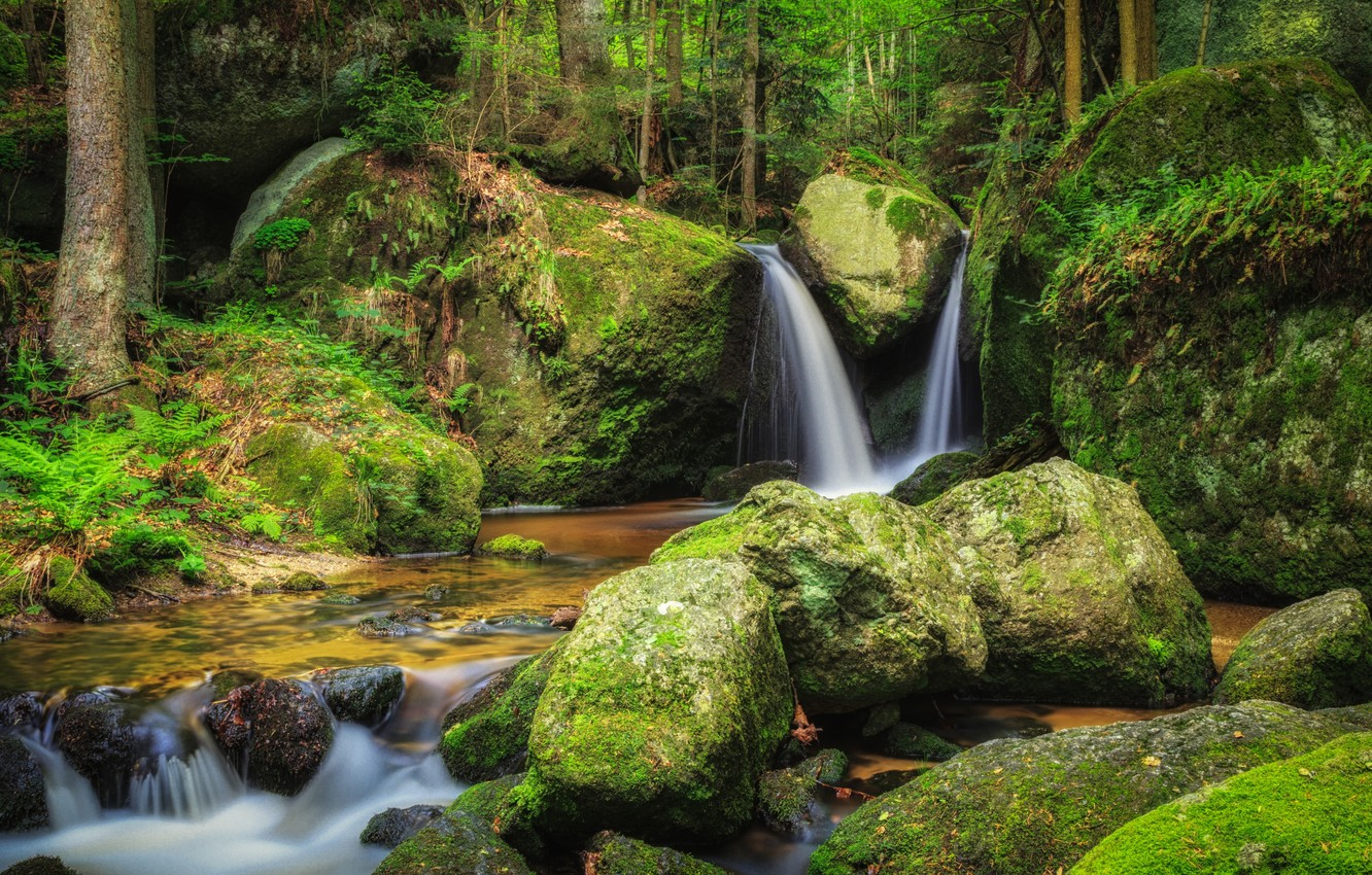 Photo wallpaper forest, water, river, stones, moss