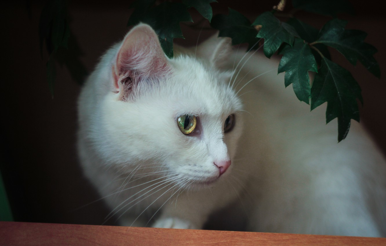 Photo wallpaper cat, cats, white, cat, cat Wallpapers