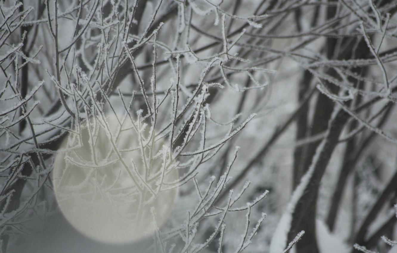 Photo wallpaper winter, frost, snow, branch, Blik, IVA
