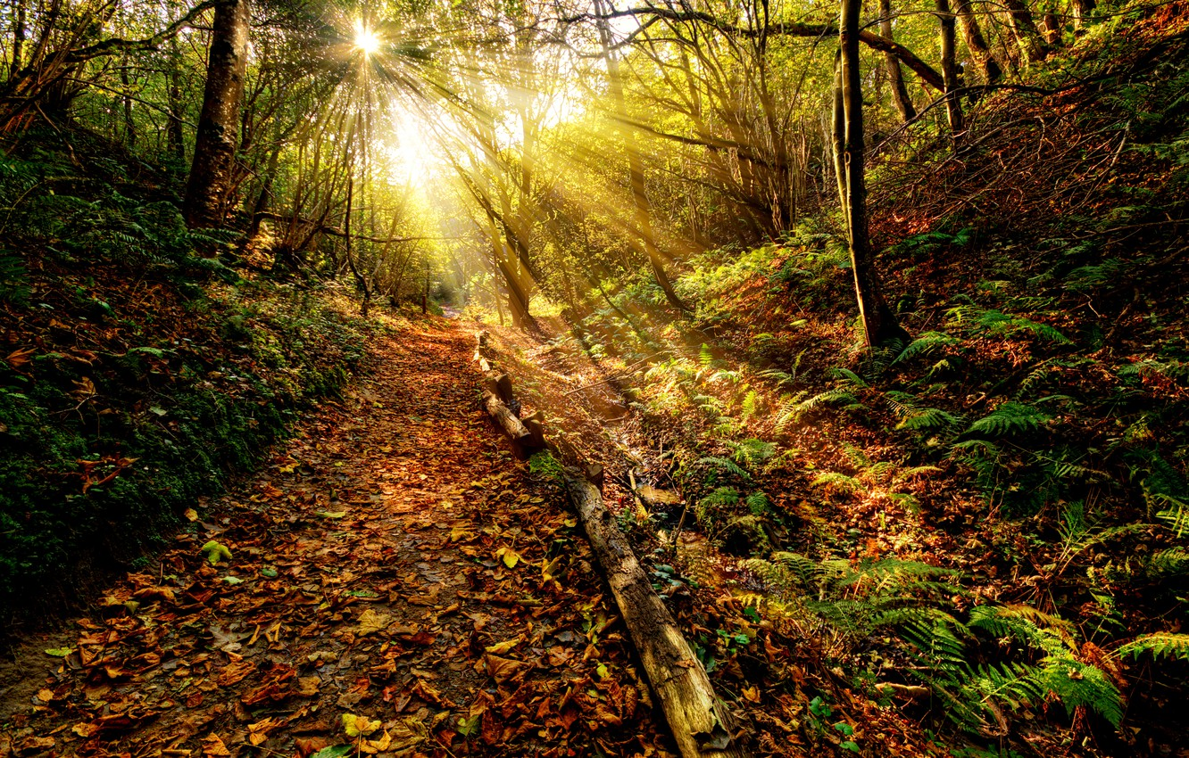 Photo wallpaper autumn, forest, the sky, grass, leaves, the sun, clouds, rays, landscape, sunset, nature, the way, …