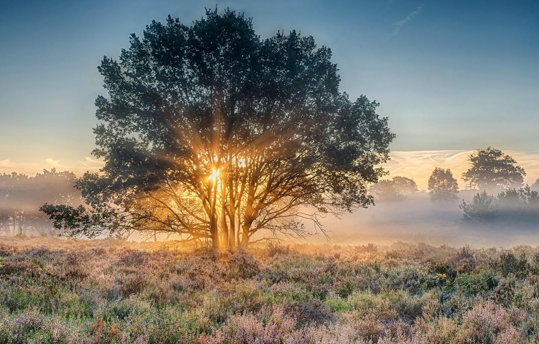 Photo wallpaper dawn, morning, Netherlands, Holland, national park, Nijverdal, Overyssel