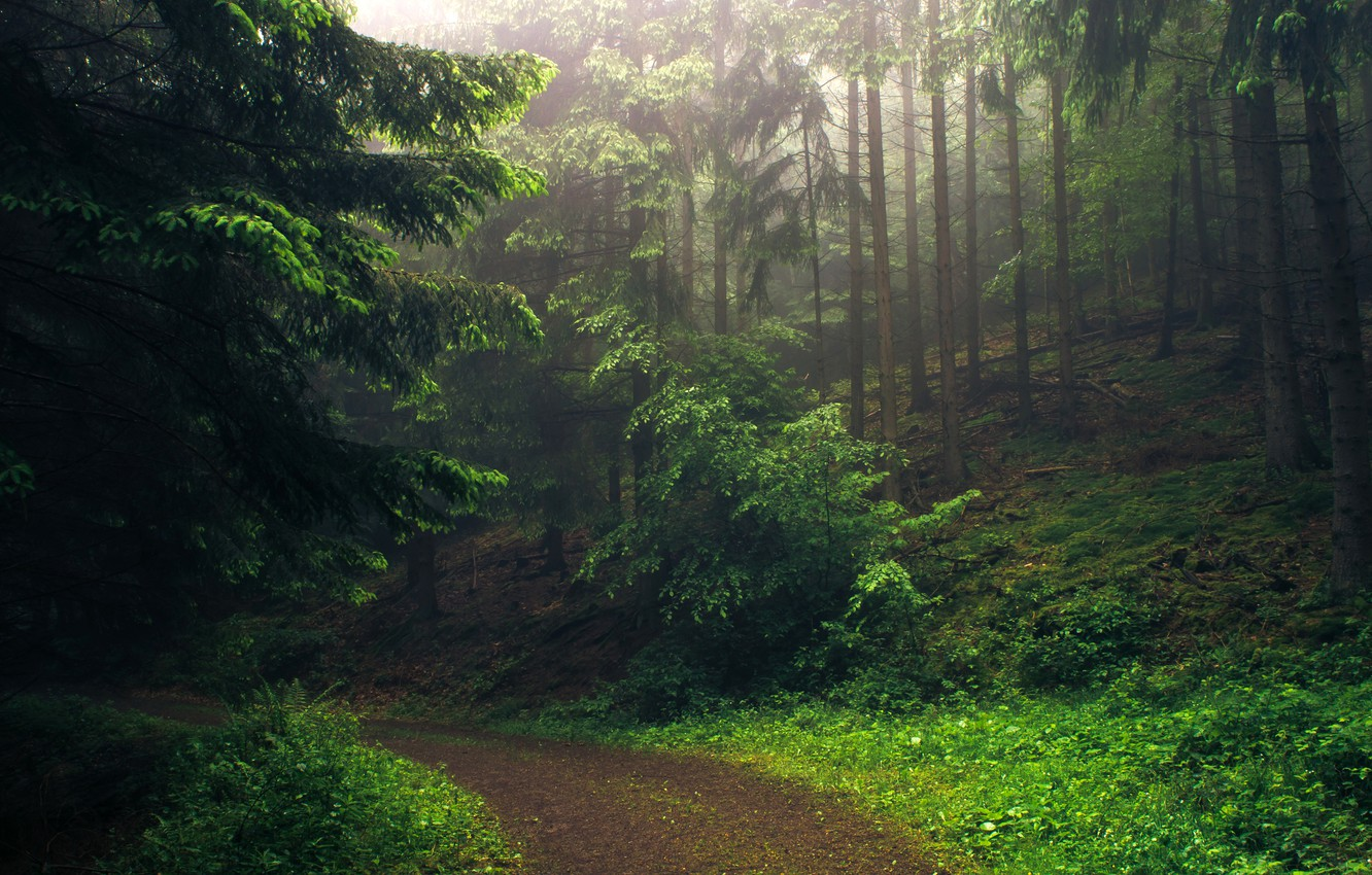 Photo wallpaper road, forest, trees