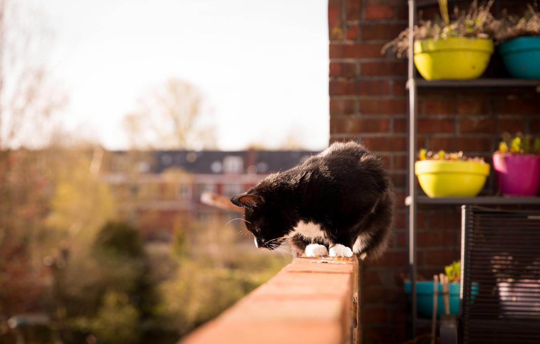 Photo wallpaper cat, black and white, balcony, pots