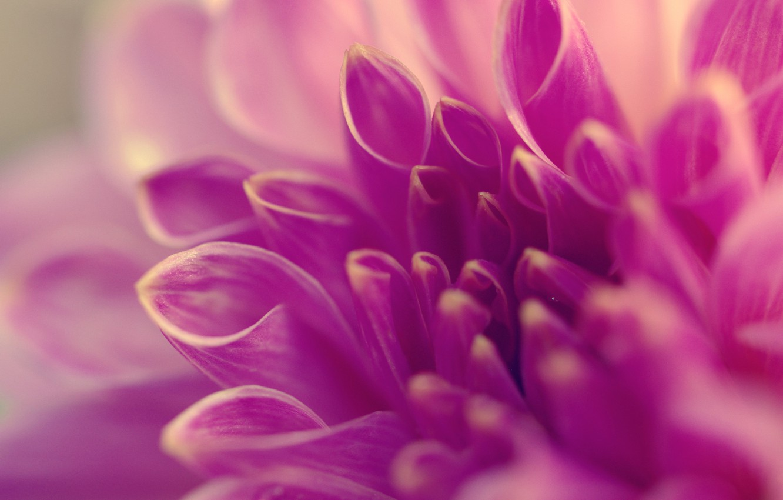 Photo wallpaper flower, macro, lilac, petals, tube